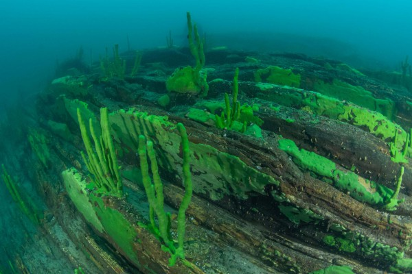 foto-taucher-unterwasserfotografie-baikalsee-baikalschwaemme-unterwasserlandschaft-558620D49-A221-0443-8599-06ABCF1E7DA6.jpg