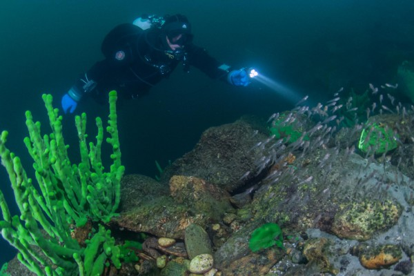 foto-taucher-unterwasserfotografie-baikalsee-baikalschwaemme-unterwasserlandschaft-aesche-23ACC0318-73D1-288B-AD3A-40B04BECBEE7.jpg
