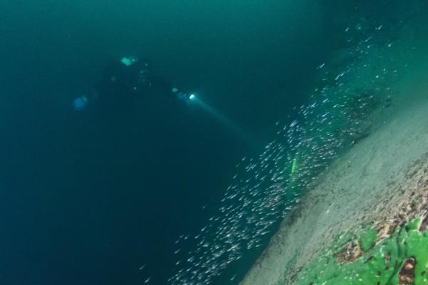 foto-taucher-unterwasserfotografie-baikalsee-baikalschwaemme-unterwasserlandschaft-aesche5697F074-4A7C-F866-2178-100510470AF4.jpg