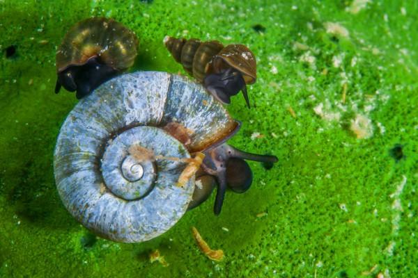 foto-taucher-unterwasserfotografie-baikalsee-schnecken9E2AABB4-F809-02E5-6E49-2664A097BF01.jpg