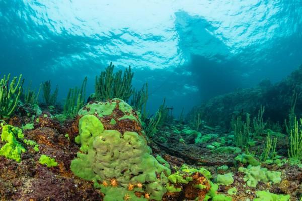 foto-taucher-unterwasserfotografie-baikalsee-unterwasserlandschaft-baikalschwaemme-dezemberA1D199A6-5B1F-C870-8128-B78A1AA2818A.jpg