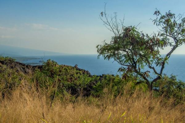 15-foto-taucher-fotografie-hawaii-kona-captain-cookFB3D496A-FC31-40EB-5EF8-04A0864AE961.jpg