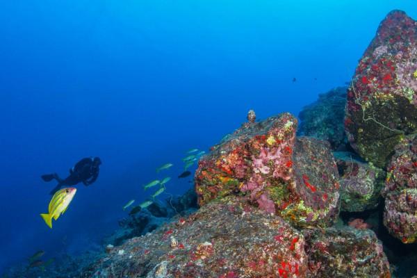 22-foto-taucher-unterwasserfotografie-hawaii-kona-lavagestein-unterwasserlandschaft-taucher0A3EFF61-AA7F-4A60-9A3E-D022A50FABCA.jpg