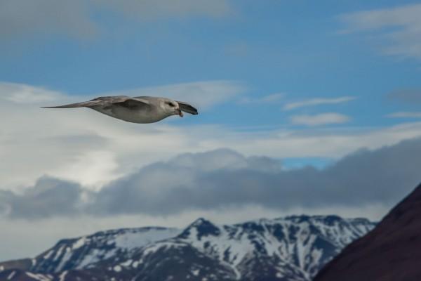 08-foto-taucher-fotografie-arktis-svalbard-eissturmvogel18FDAE1C-9CCB-D7BA-3E64-470395FC3642.jpg