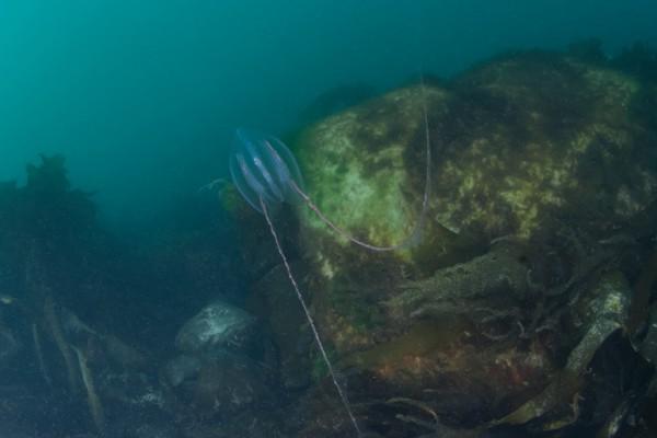 16-foto-taucher-unterwasserfotografie-arktis-svalbard92D350A5-CA12-71D7-D725-04B3C99BF6F4.jpg
