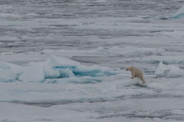 20-foto-taucher-fotografie-arktis-svalbard-packeis-eisbaerAE681791-B1B6-2CE6-1A94-A4D7E4BA254B.jpg