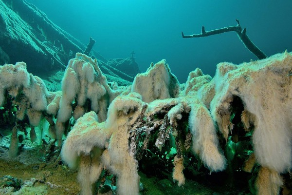 foto-taucher-unterwasserfotografie-trockentauchanzug-kallweit-samarangerseeCDBA46D9-3661-02C1-0B8F-7467E84EE0E4.jpg
