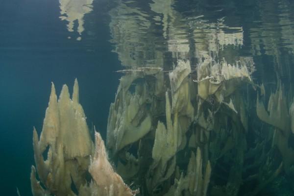 foto-taucher-unterwasserfotografie-trockentauchanzug-kallweit-tirol1047238F-6FCF-CD98-AA24-9F8126ED7B02.jpg
