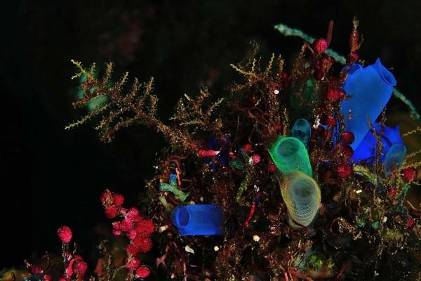 foto-taucher-unterwasserfotografie-indonesien-indonesien-bali-schwaemme088615DB-1130-B7EE-6072-C0B5B504392C.jpg