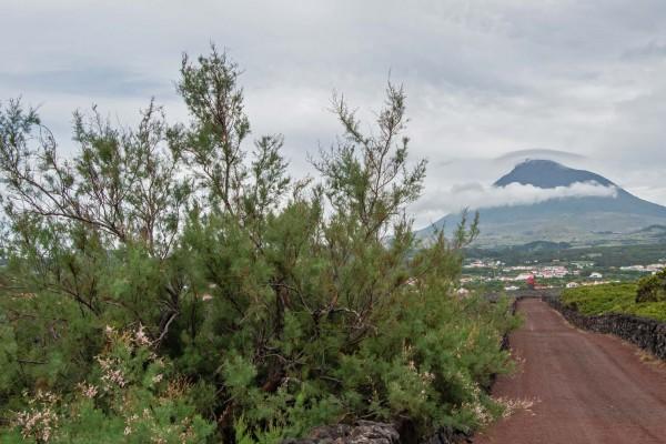 foto-taucher-fotografie-azoren-pico-vulkan-2E23C2EB6-1B5B-108F-FF31-547FD3C2220B.jpg
