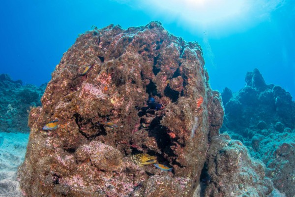 foto-taucher-unterwasserfotografie-azoren-faial-s-y-saildive-liveboard-katamaran-madalena-muraene27A805FD-4DFF-3765-7832-C36D49C4EAD9.jpg