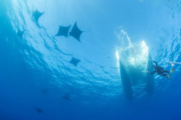 foto-taucher-unterwasserfotografie-azoren-princess-alice-bank-mobulas-s-y-saildive-liveboard-katamaran2CB09E40-7F64-7637-7D6F-36D4AA8F6947.jpg
