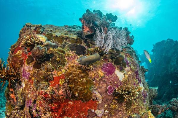 foto-taucher-unterwasserfotografie-seychellen-franitblock-mit-bewuchsD3B88A5F-86A0-F057-D349-BB83F45328EA.jpg