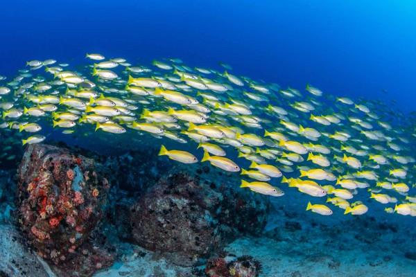 foto-taucher-unterwasserfotografie-seychellen-granitblock-fischschwarm1819F464-1970-3C3C-5330-84F13DD902DF.jpg