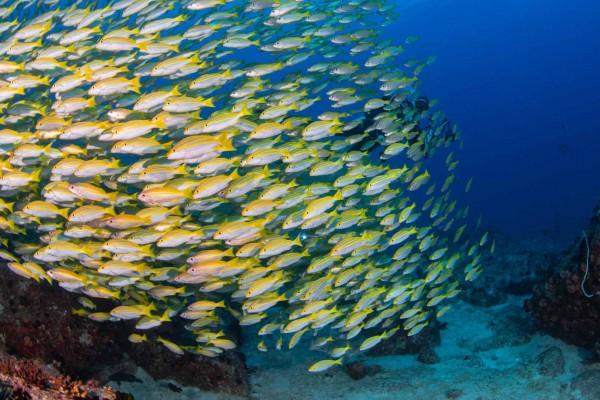 foto-taucher-unterwasserfotografie-seychellen-granitblock-fischschwarmEE05310C-6C52-79EB-0D0A-23E45F1A5ED5.jpg