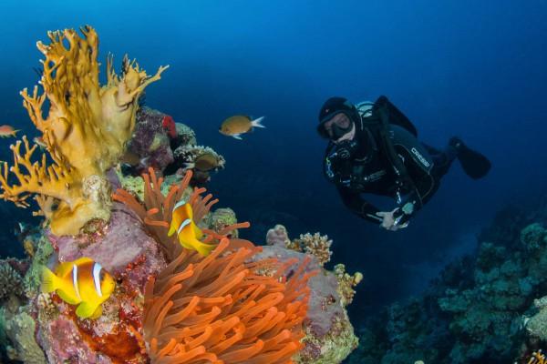 foto-taucher-unterwasserfotografie-aegypten-rote-anemone-amphiprionEF16CCFD-19A6-DFD3-D23C-A10F80508CBD.jpg