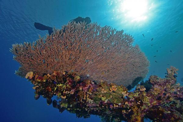 foto-taucher-unterwasserfotografie-aegypten-tischkoralle0968F83A-F375-E857-CD76-01C7B8C83438.jpg