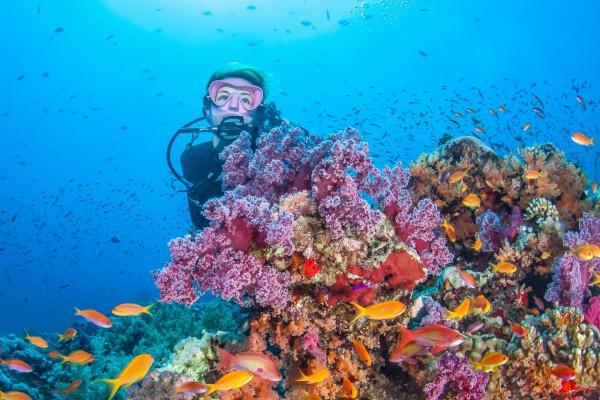 foto-taucher-unterwasserfotografie-aegypten-unterwasserlandschaft5D892574-13FC-DDDF-B80D-70BD1E5CE6B1.jpg